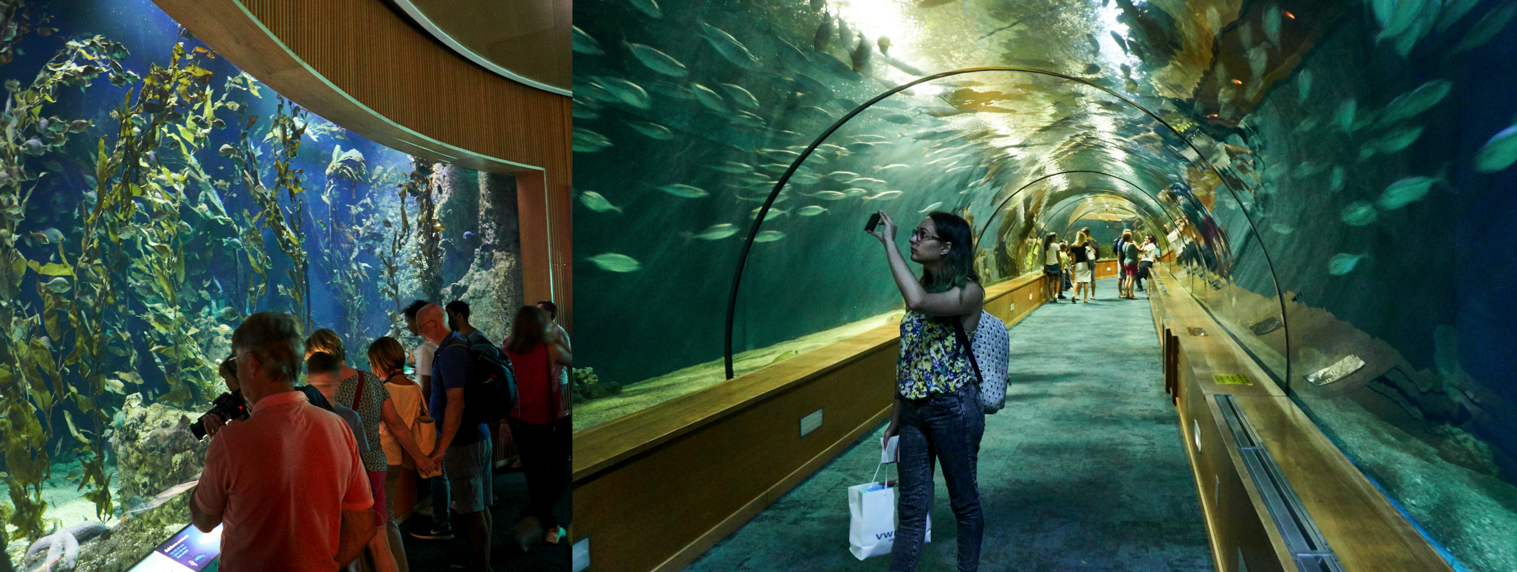 One of the aquariums and the big tunnel