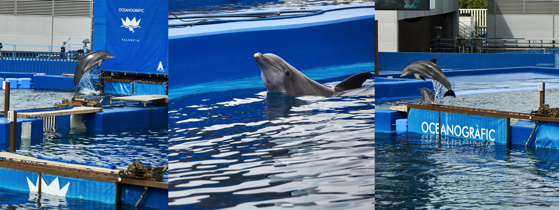 Jump dolphin, jump! 🐬