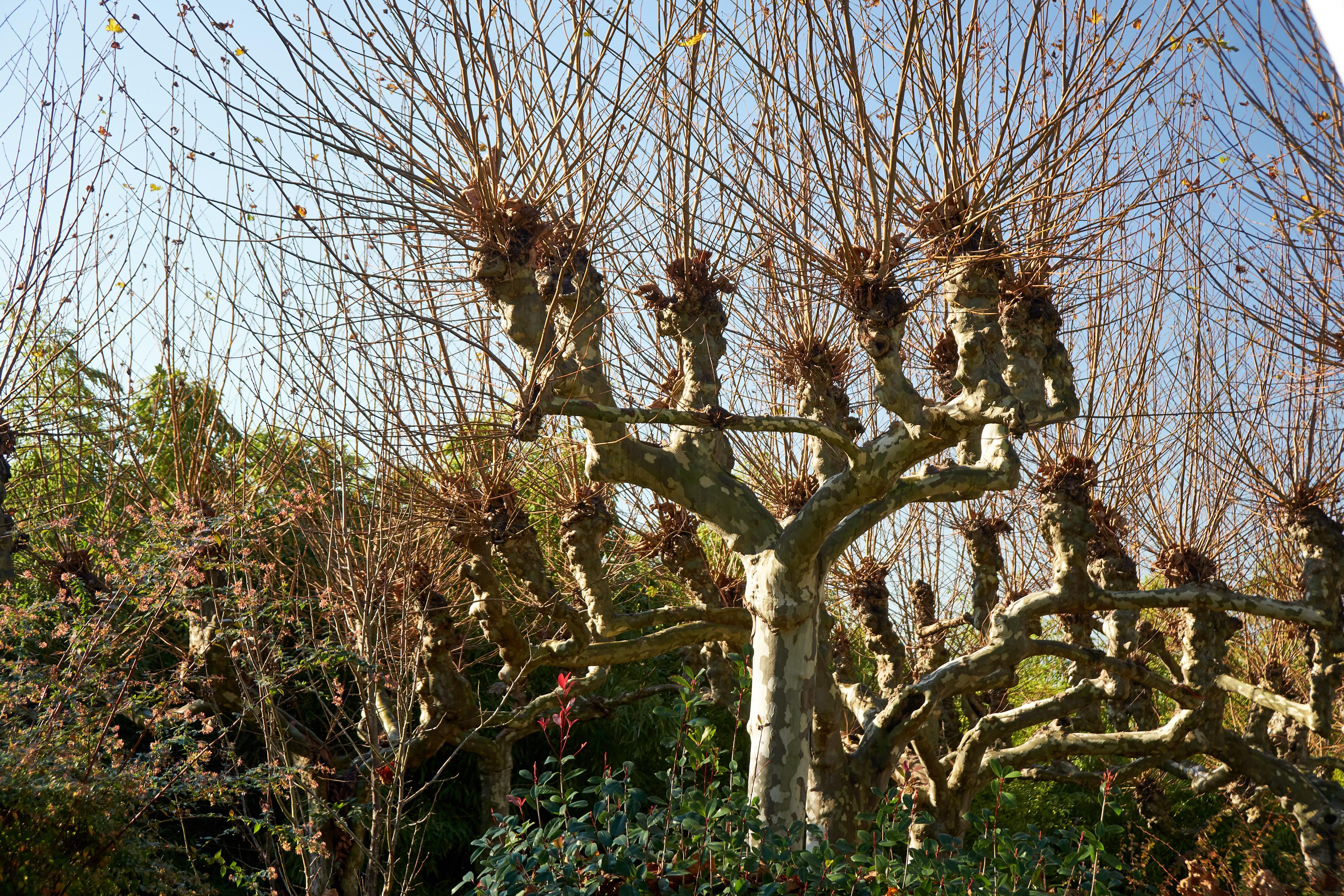 Weird Trees 🌳